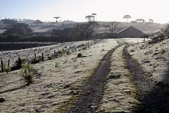 Dias de inverno...... (Miriam Cardoso de Souza) Tags: winter gelo luz brasil rural photo casa estrada perspectiva fotografia inverno riograndedosul frio caminho serragaúcha galpão rotadosol