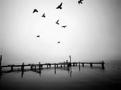 untitled (sparth) Tags: blackandwhite bw white black birds dock empty 4 flight minimal vol minimalism kirkland ricoh noirblanc grd grd4 ricohgrdiv grdiv ricohgrd4