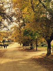 Y existen sitios que nunca pude conocer. (Melisa) Tags: autumn trees sun fall sol argentina leaves hojas rboles otoo crdoba yacantodecalamuchita