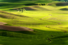Recollections (Ireena Eleonora Worthy) Tags: nature beautiful landscape washington awesome top10 thetree palouse steptoebutte northernstraitsphotography