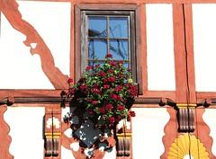 House of hearts (:Linda:) Tags: window germany town heart thuringia flowerpot herz halftimbered blumentopf fachwerk flowerbox meiningen windowwithflowers blumenintpfenoderksten halftimberedwindowwithflowerbox