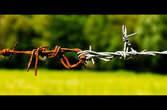 Don't let go (Damien Cox) Tags: uk field fence nikon rust rusty barbedwire knotted damiencox dcoxphotographycom