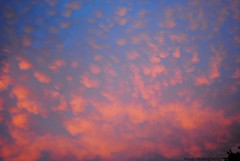 Cotton Candy in the Sky!!! (Gio-Photography) Tags: nikon d3000 dslr users
