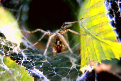 (zool18) Tags: spider macro mark2 home canon animal green garden insect life