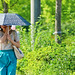 Women with A Parasol : 日傘の女性