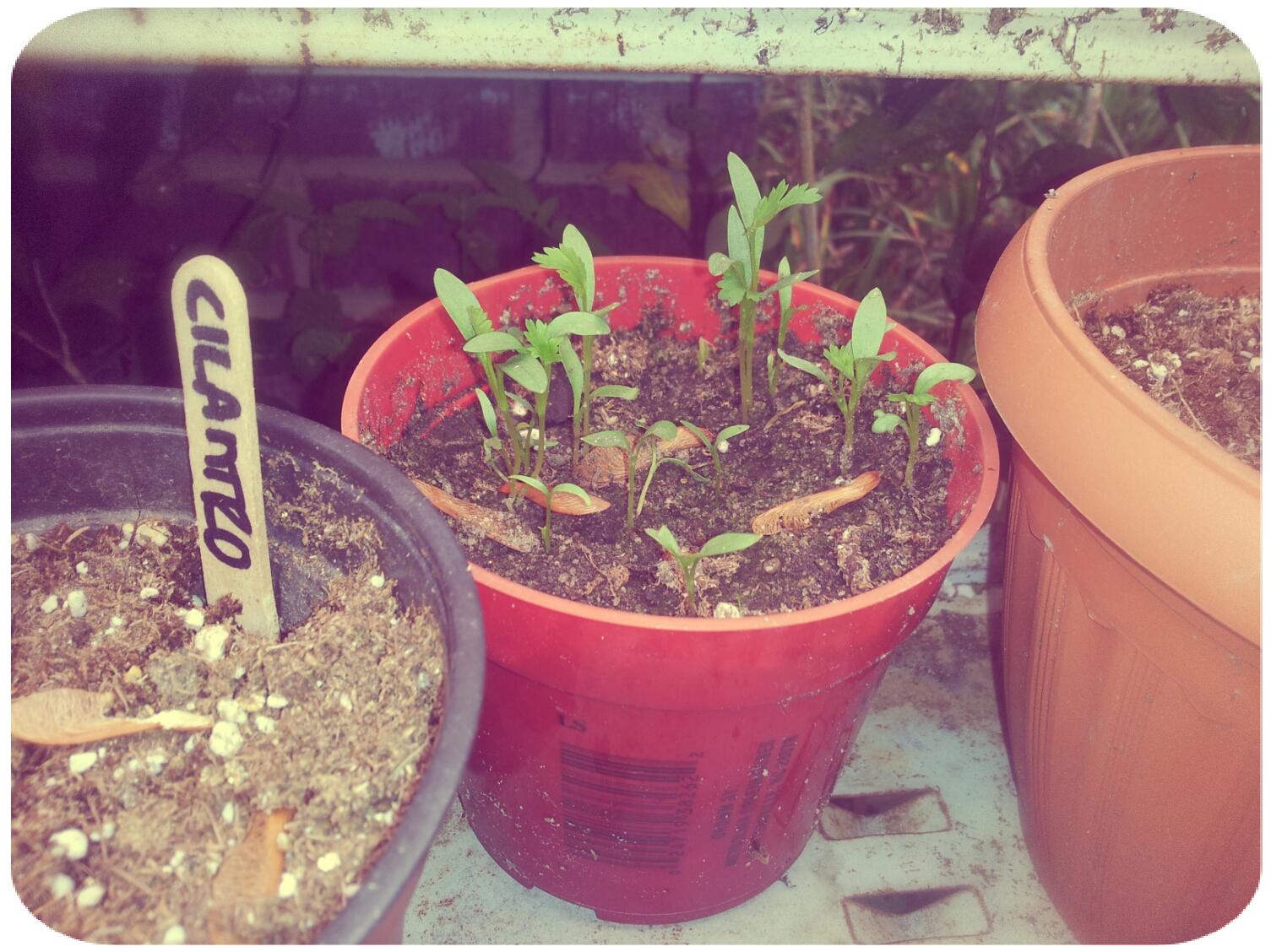 2012-03-30 13.52.09_Melissa_Round.jpg