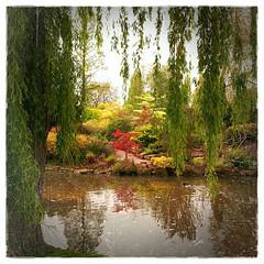 Glimpse a Japanese Garden