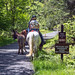 Minnewaska State Park - Wawarsing, NY - 2012, May - 22.jpg by sebastien.barre