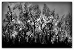 Vértigo (Vilchez57) Tags: luz arbol foto arboles movimiento fotografia blanconegro wn fotografos procesado abtracto vilchez57
