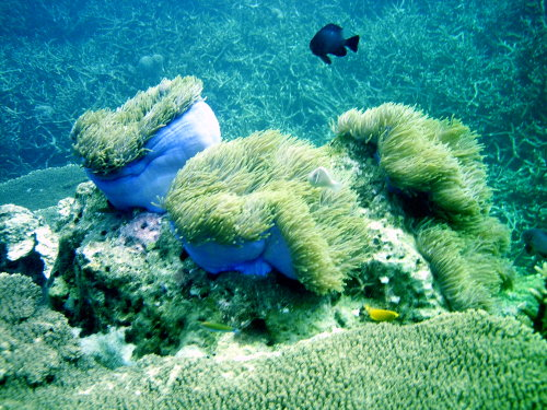 Diving Malesia