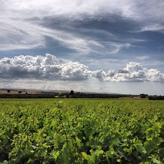 ....in the vines (Liv ) Tags: sky italy cloud verde green colors photo interestingness italian italia nuvole tag1 blu tag bat capture bt puglia bari 4s murge murgia iphone sky1 apulia normanna normanno canosa canosadipuglia laivphoto iphone4s