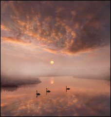 Beautiful Morning (adrians_art) Tags: sky cloud mist water birds fog sunrise reflections silhouettes swans rivers