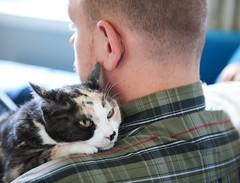 Sick Kitty (Kim_Reimer) Tags: pet canada man male love cat feline bc close adult britishcolumbia kitty calico northamerica sickness comfort shoulder sick companion chilliwack gettyimagescanada