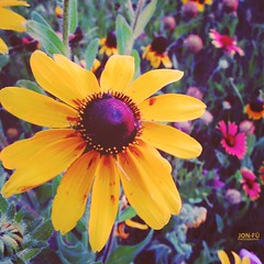 The Flower (Jon-F, themachine) Tags: flowers plants plant flower color canon powershot   2012    jonfu sd1300