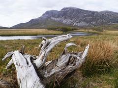 Loch Stack & Arkle (Niall Corbet) Tags: mountain tree scotland stump scree sutherland deadwood arkle lochstack