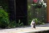 Death at Stogumber Station. (lens buddy) Tags: bridge station train canon track railway somerset steam steamtrain dunster levelcrossing quantocks minehead gwr westsomerset stogumber blueanchor westsomersetrailway watchet dunstercastle quantockhills williton canoneosdigital railwaybridges washford