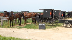 Amish parking, Cashton, 29 June 2012 (ed_needs_a_bicycle) Tags: sigmadc1770mmf284macrohsm 2012 cashton wisconsin unitedstates amish parking cart carts gathering growersauction horses sign horse