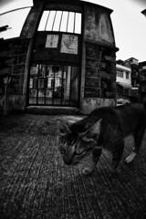 (Keith Kwok) Tags: candid snapshot streetphotography snap urbanlife snapphotography streetsnap livinginthecitycity