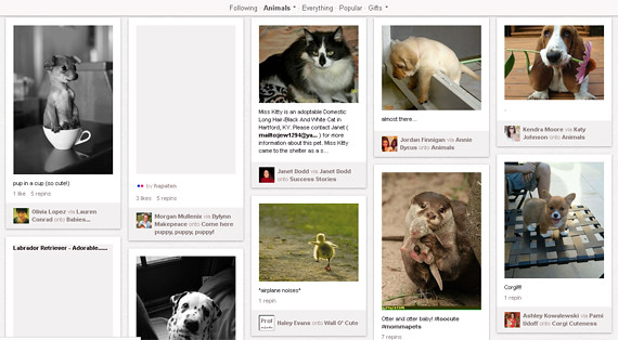 Pinterest category for Animals