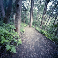 forest path (sue.h) Tags: 6x6 film forest mediumformat australia pinhole 120film queensland ferns zero2000 zeroimage portra160 springbrooknationalpark