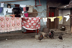 33-204 (ndpa / s. lundeen, archivist) Tags: nick dewolf nickdewolf color photographbynickdewolf 1970s 1972 fall film 35mm winter republicofchina taiwan taiwanese china chinese 1973 building house home localhome door doorway clothes clothesline bird turkey birds turkeys clotheslines 33 reel33