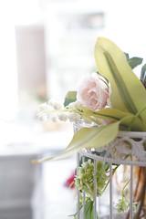 afternoon (*tmk*) Tags: sweet styling tabletop table tablewear tea time summer flower bokeh sweets pink white