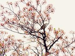 春季の自然 (Jon-Fū, the写真machine) Tags: jonfu 2016 olympus omd em5markii em5ii em5mkii em5mk2 em5mark2 オリンパス mirrorless mirrorlesscamera microfourthirds micro43 m43 mft μft マイクロフォーサーズ ミラーレスカメラ ミラーレス一眼カメラ ミラーレス機 spring 春 outdoors 野外 nature 自然 flower flowers 花 華 plant plants 植物 flora snapseed japan 日本 nihon nippon ジャパン ジパング japón जापान japão xapón asia アジア asian fareast orient oriental aichi 愛知 愛知県 chubu chuubu 中部 中部地方 nagoya 名古屋 tree trees 木 木々 sakura cherryblossoms cherryblossom さくら 桜 hanami 花見