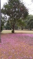 20160811_110420 (filipealves1) Tags: sopaulo trees nature natureza parque ibirapuera brazil brasil