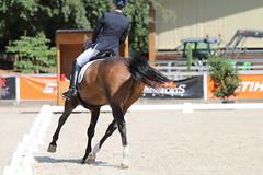 IMG_7670 (dreiwn) Tags: dressage dressur dressuur pferd reitturnier turnierreiten pferdesport horse horseback horseriding equestrian reitverein dressurprfung kandare doublebridle reiten pferde reitplatz ridingarena