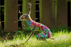flowerbomb hare (adore62) Tags: feltedfido flowerbomb hare brooches felted embroidered embroidery