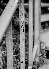 """Panda Sex God 1"" (aweiss.sf) Tags: greenwichsteps 38mm analog blackwhite california film fp4 graf graffiti halfframe ilford olympus pen penft sanfrancisco"