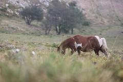 IMG_1678 (Serena Rebechi) Tags: matanna montagna toscana vetta natura