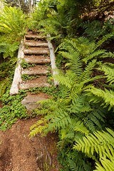 Ferns & Steps (Karen_Chappell) Tags: ferns fern steps stairs forest woods trail path eastcoasttrail newfoundland nfld landscape avalonpeninsula canada scenery scenic green brown canonefs1022mm wideangle