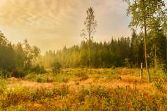 Morning Light (Peter Vestin) Tags: nikondf sigma24mmf14dghsmart adobecreativecloudphotography topazlabscompletecollection skattkrr karlstad vrmland sweden nature landscape
