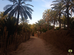 Palmeraie de Sidi Okba (Ath Salem) Tags: algrie paysage tourisme dcouverte    biskra sidi okba kantara palmeraie dattes brche montagne beaut rare porte sahara