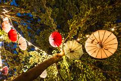 Abhngen (-DerFranke-) Tags: canon eos6d eos 6d ef1635f4l wf 1635 f4 l germany deutschland braunschweig brunswick brunsviga brgerpark kultur im zelt schirme regenschirme umbrellas baum tree deko dekoration blaue stunde blue hour lichter lights