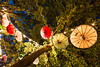 Abhängen (-Der Franke-) Tags: canon eos6d eos 6d ef1635f4l wf 1635 f4 l germany deutschland braunschweig brunswick brunsviga bürgerpark kultur im zelt schirme regenschirme umbrellas baum tree deko dekoration blaue stunde blue hour lichter lights