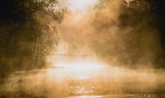 Brcke ber den Fluss (lippold.tobias) Tags: schweden sonnenaufgang wasser flus brcke nebel wald natur