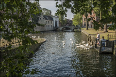 Bruges (David Gilson) Tags: bruges belgium europe landscape canal water bridge buildings trees birds swan wildlife people