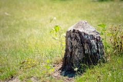lake katherine. july 2015 (timp37) Tags: tree stump palos heights lake katherine summer july 2015 illinois