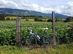. @Regrann del da para @xiomy.guerrero - Subachoque, Cundinamarca - Colombia es Colombia y en bici mejor  #iamspecialized #yourrideyourrules #goforit #enmicolombia #cyclist (EnMiColombia.com) Tags: foto regrann del da para xiomyguerrero subachoque cundinamarca colombia es y en bici mejor  iamspecialized yourrideyourrules goforit cyclist