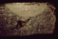 (nihilnocet) Tags: canoneos700d tamronaf70300mmf456dildmacro nihilnocet nature nightlight enigmatic moth sepia