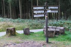 Von Willingen nach Usseln (dieter.steffmann) Tags: rothaargebirge hochsauerland rothaarsteig hillekopf uplandsteig medebach kstelberg