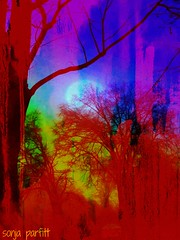 painted (Sonja Parfitt) Tags: manipulated layered trees sky red blue