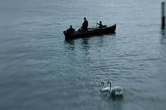 Sunday (K M V) Tags: blue birds lensbaby boat fishing swans somethingblueinmylife lensbabycomposerpro