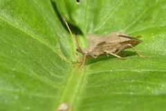 _DSC9093-Edit (Smoker1982) Tags: flower animal monster bug garden leaf bugs surprise