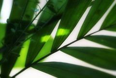 Green - 1. May - International Workers' Day (Silandi) Tags: sun plant reflection green nature leaf may sunreflection 2012 nationalholiday walpurgisnight internationalworkersday 1may