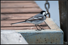 Bird (mmoborg) Tags: sweden sverige mmoborg mariamoborg