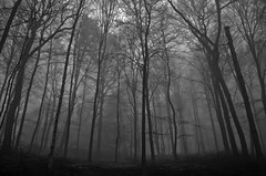 lost in the forest II (me-graphy) Tags: morning trees bw white mist black tree nature silhouette misty fog forest germany out deutschland grey haze woods nikon nebel walk natur foggy silhouettes grau nebula sw hazy wald bume baum schwarz 2012 morgens nebulous athmosphere weis neblig megraphy