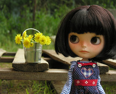 bucket of dandelions
